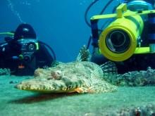 Egypte plongée sous-marine