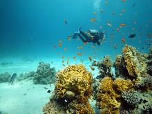 Plongée Sharm el Sheikh