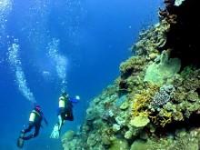 Un site de plongée en Tunisie